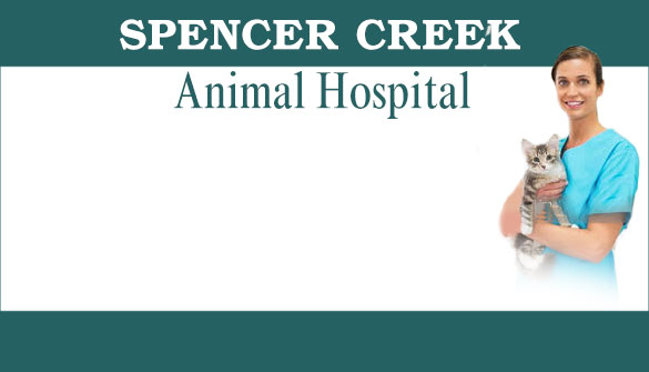 Spencer Creek Animal Hospital in Dundas Ontario